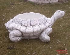 Büyük Kaplumbağa Çiçeklik