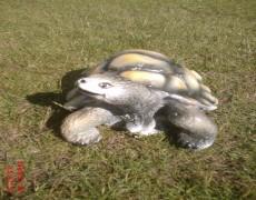 Küçük Kaplumbağa Heykeli