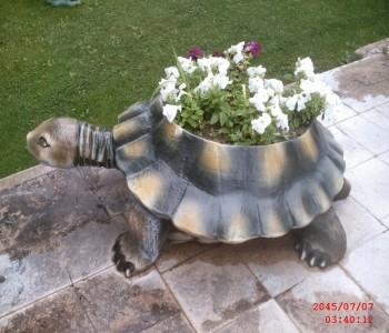 Kaplumbağa Çiçeklik