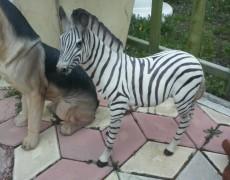 Kenya Zebra Heykeli
