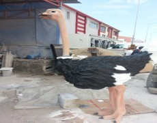 Ostrich Pictures
