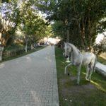 Şaha Kalkmış At Figürü