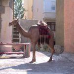 Camel Models